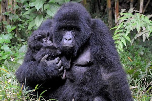 Real Gorillas Gorilla Kleen Pressure Washing Sarasota